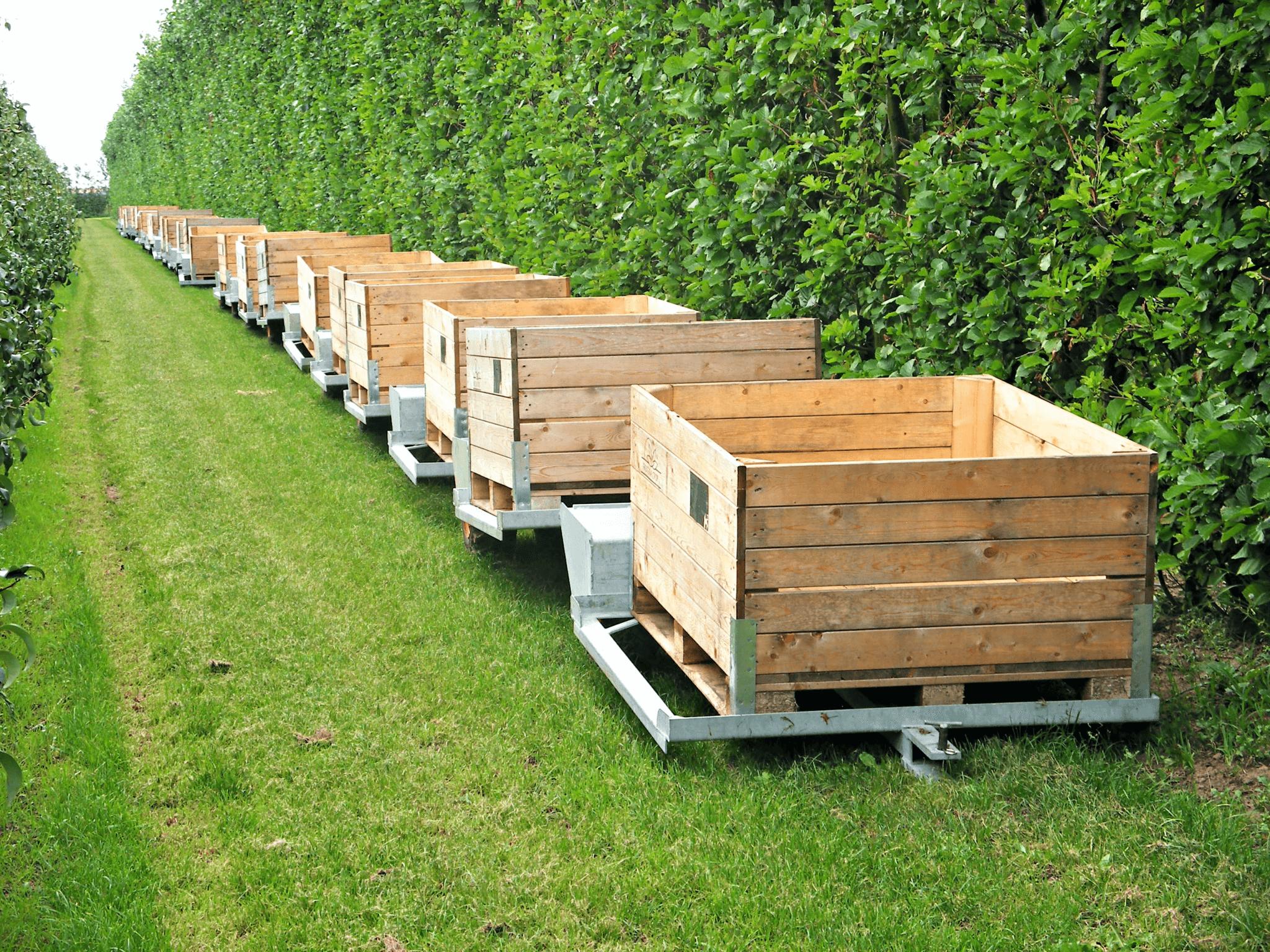 Fruitbedrijf Van den Berge_Najaar_lege kisten pluktreinen