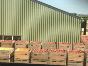 Fruitbedrijf Van den Berge_Over ons bedrijf