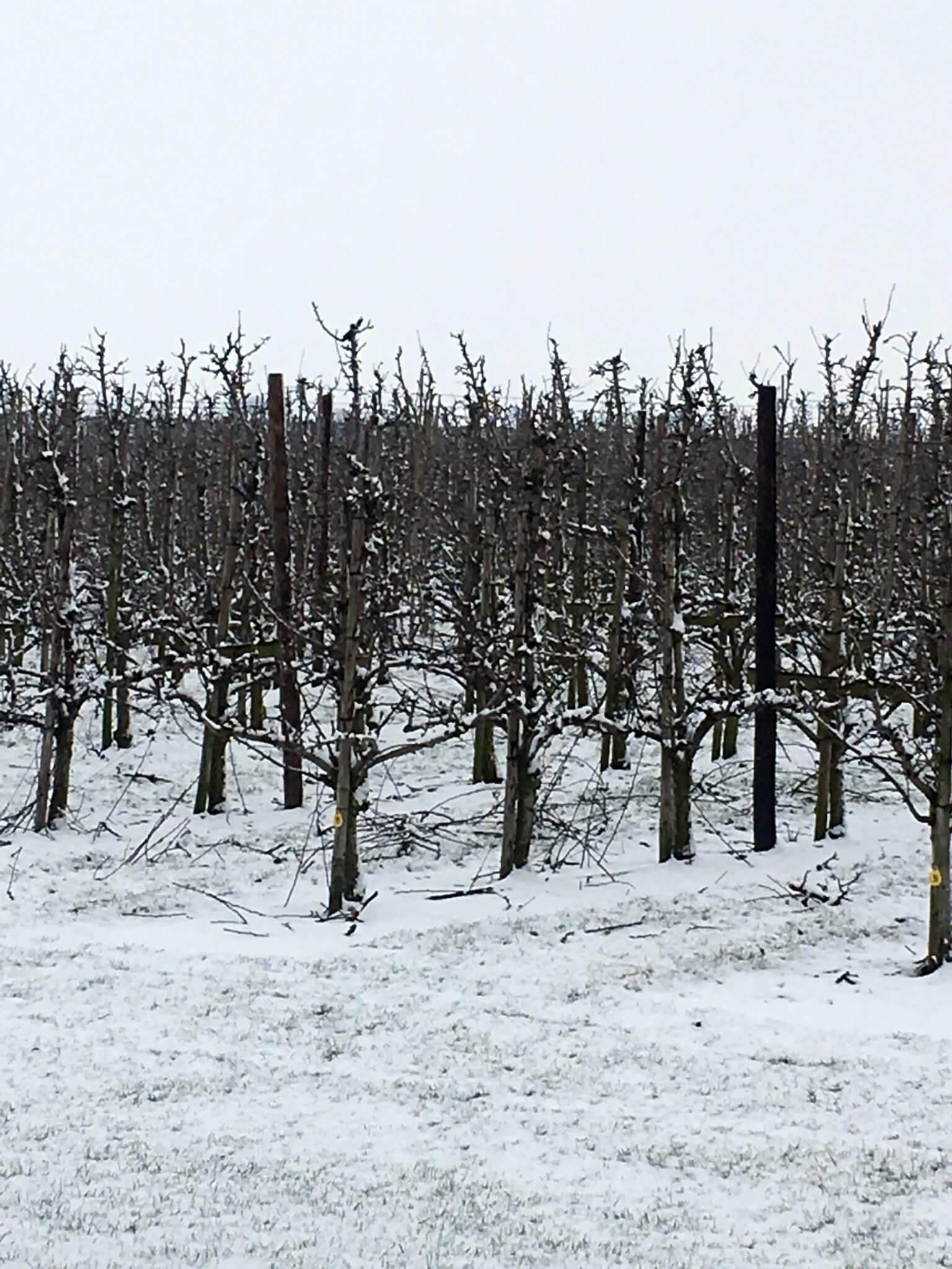 Fruitbedrijf Van den Berge_11022017_2