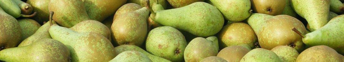 Fruitbedrijf Van den Berge_Conference_in_kisten