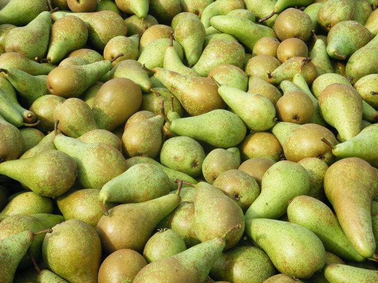 Fruitbedrijf Van den Berge: Conference in kisten