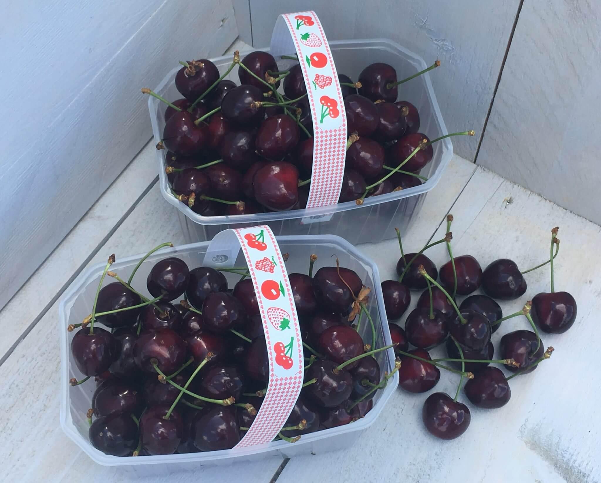 Fruitbedrijf Van den Berge: kersen 1
