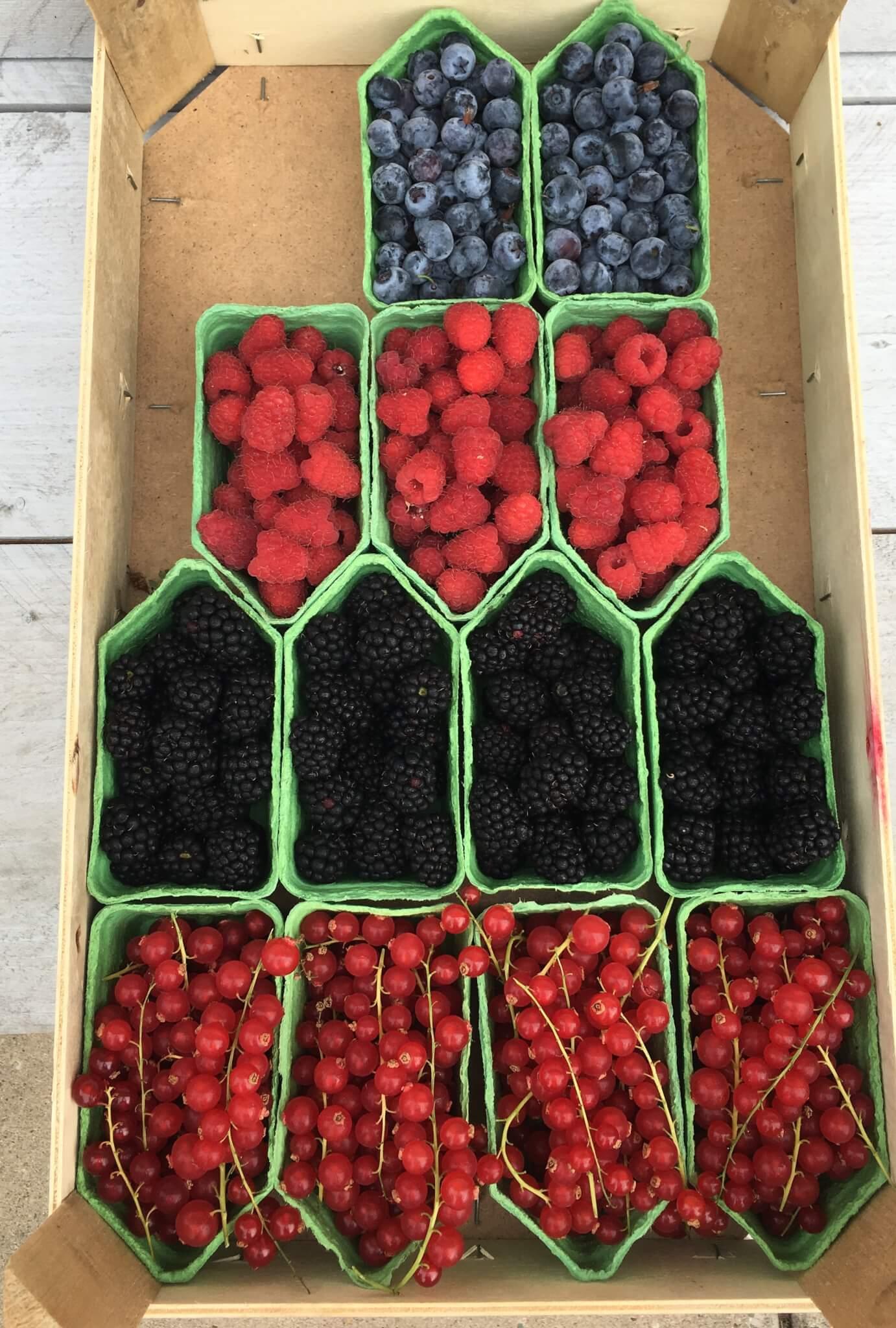 Fruitbedrijf Van den Berge: rode bessen frambozen bramen