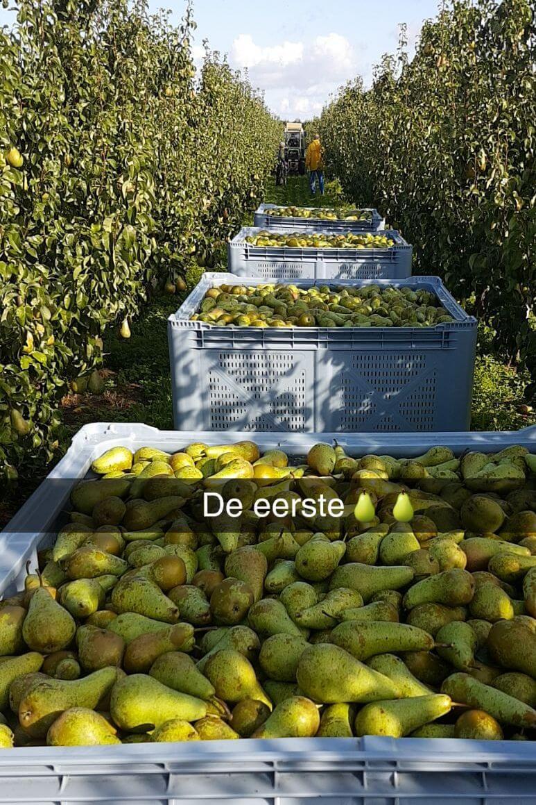 Fruitbedrijf-Van-den-Berge_Conference_ 2017-1jpg
