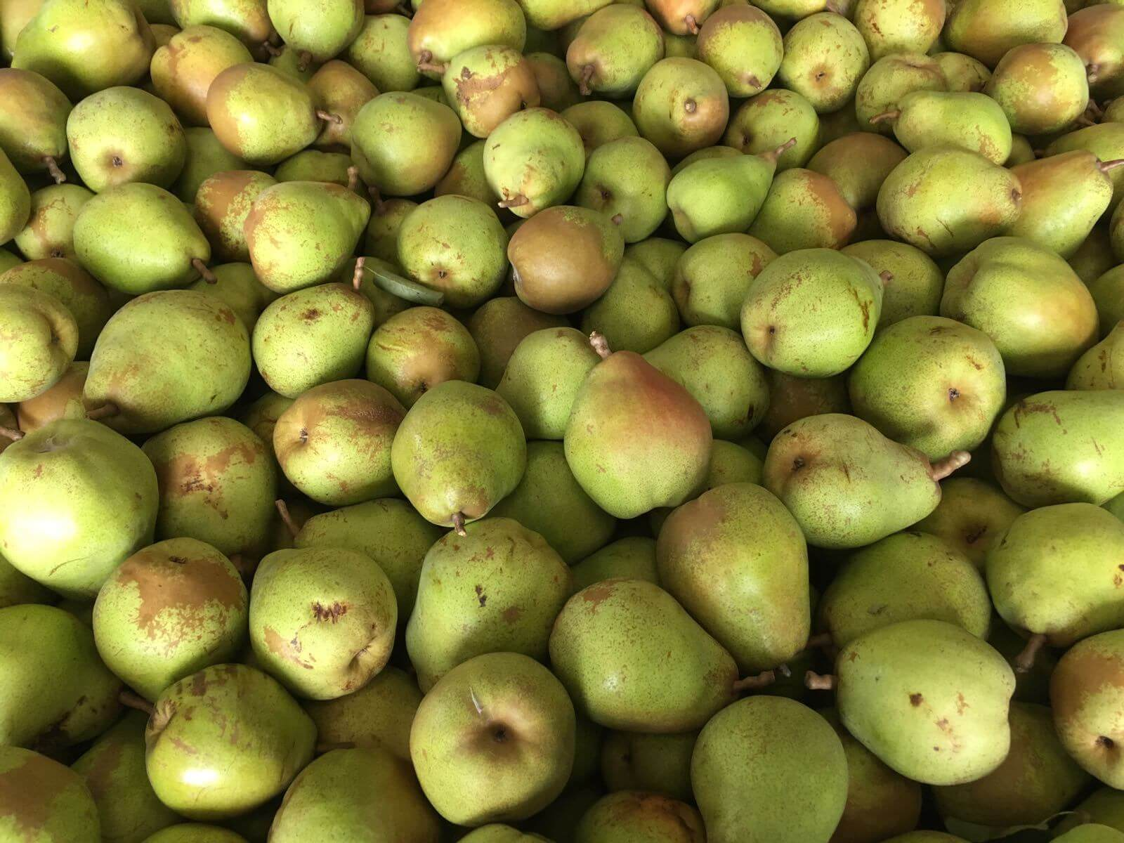 Fruitbedrijf-Van-den-Berge_Doyenne du Comice_ 2017
