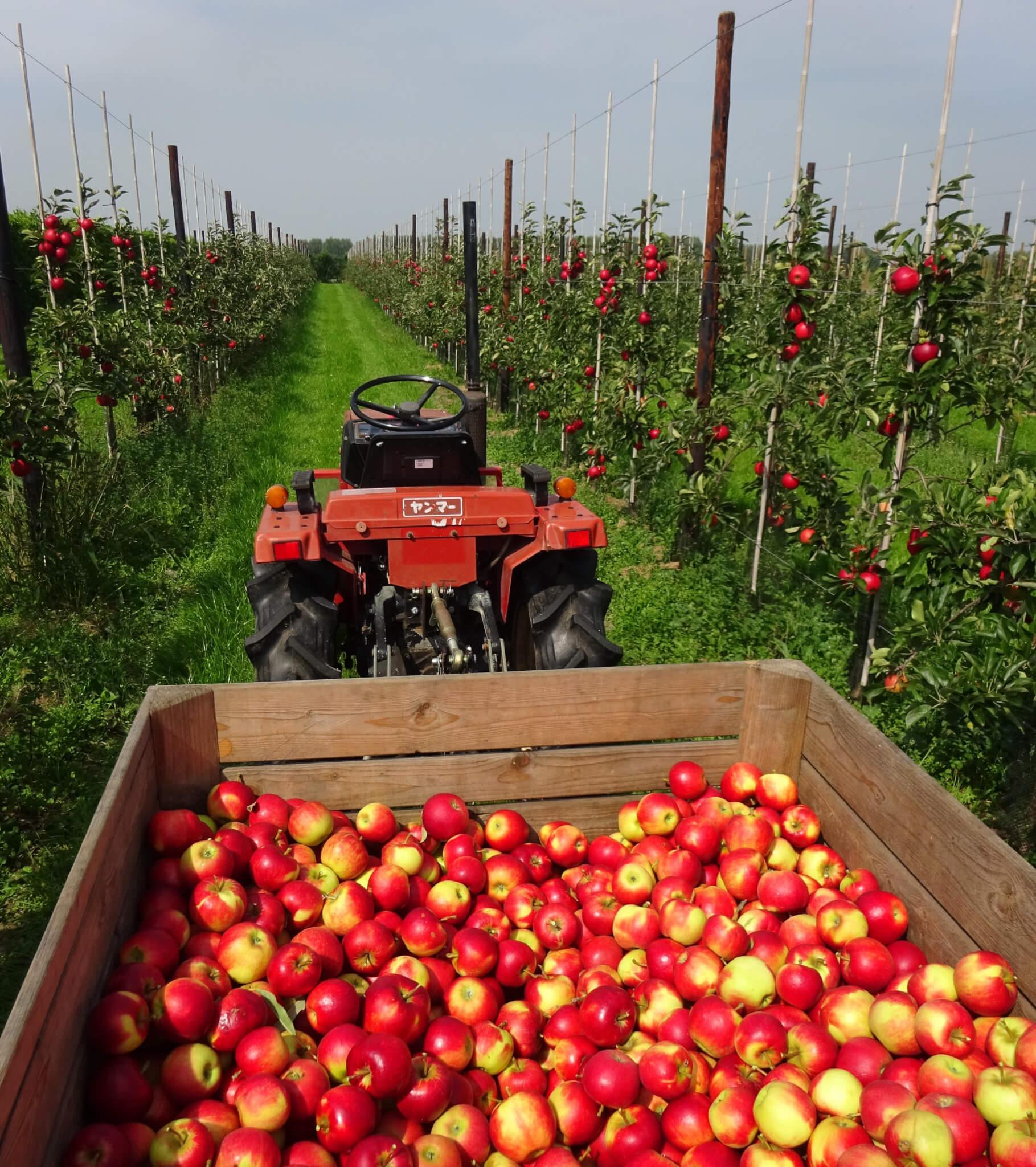Fruitbedrijf-Van-den-Berge_Elstar_2017_pluktrein