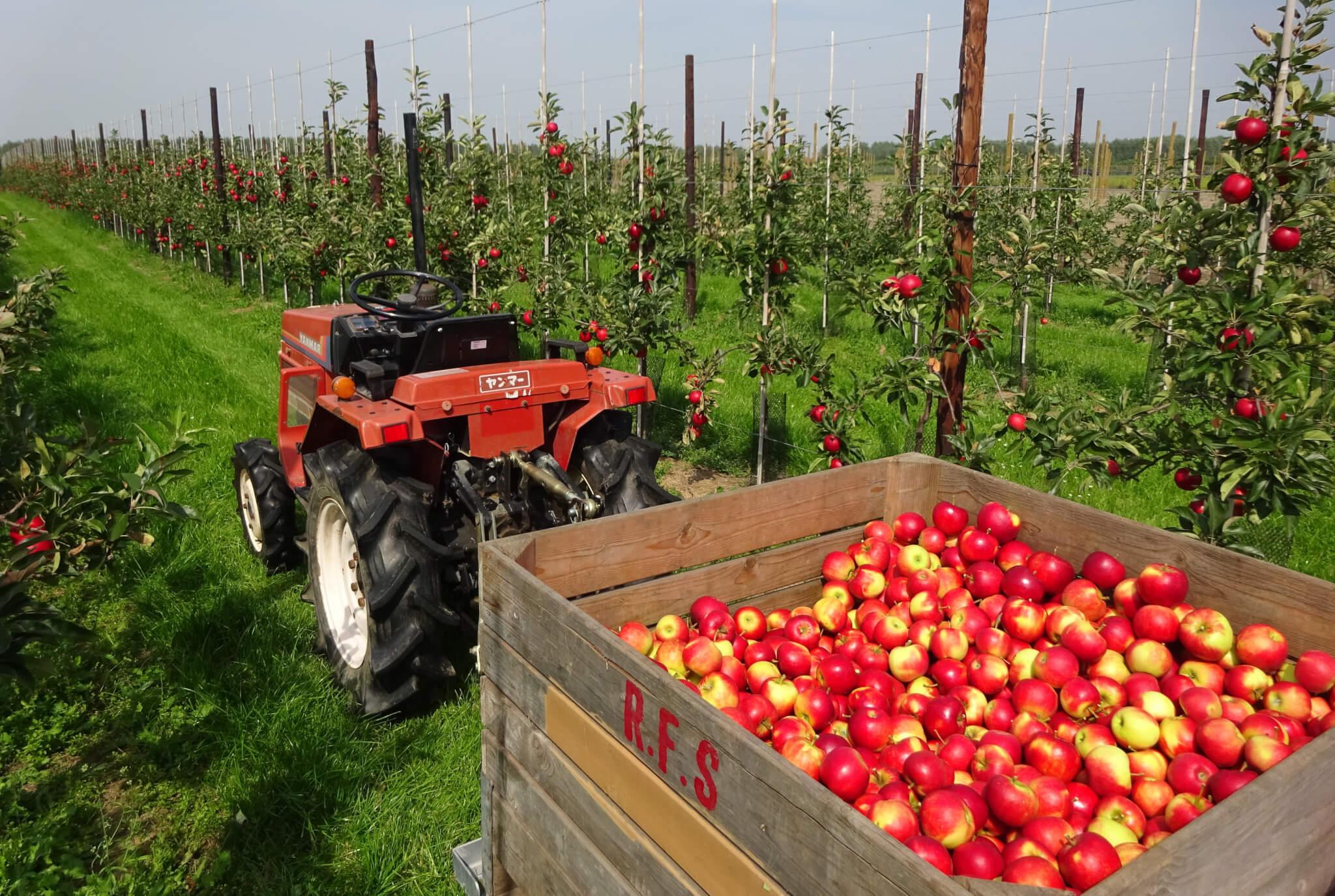 Fruitbedrijf Van den Berge_Pluk 2017_2