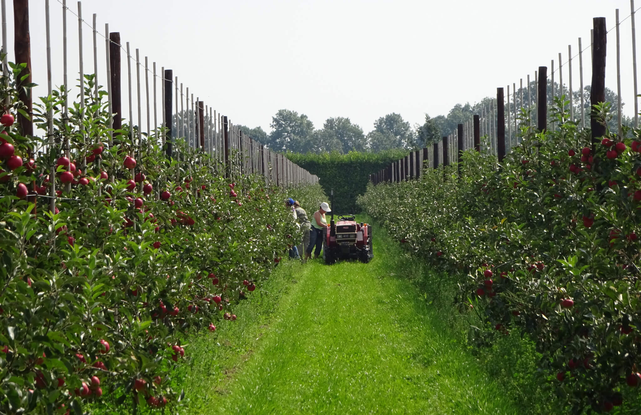 Fruitbedrijf Van den Berge_Pluk 2017_3