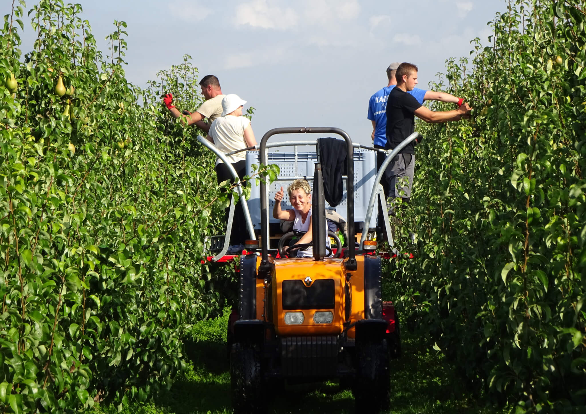 Fruitbedrijf Van den Berge_Pluk 2017_4