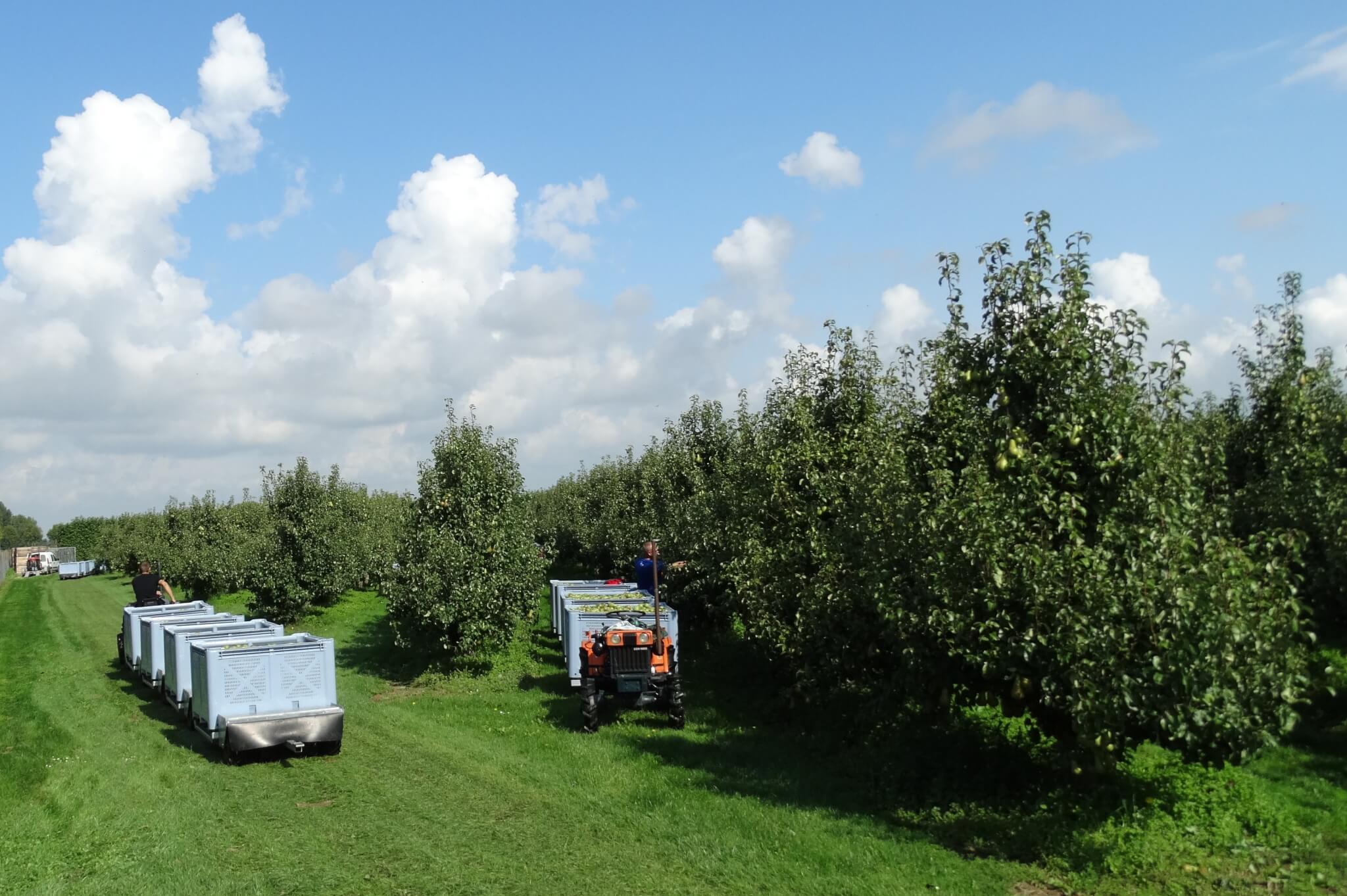 Fruitbedrijf Van den Berge_Pluk 2017_7