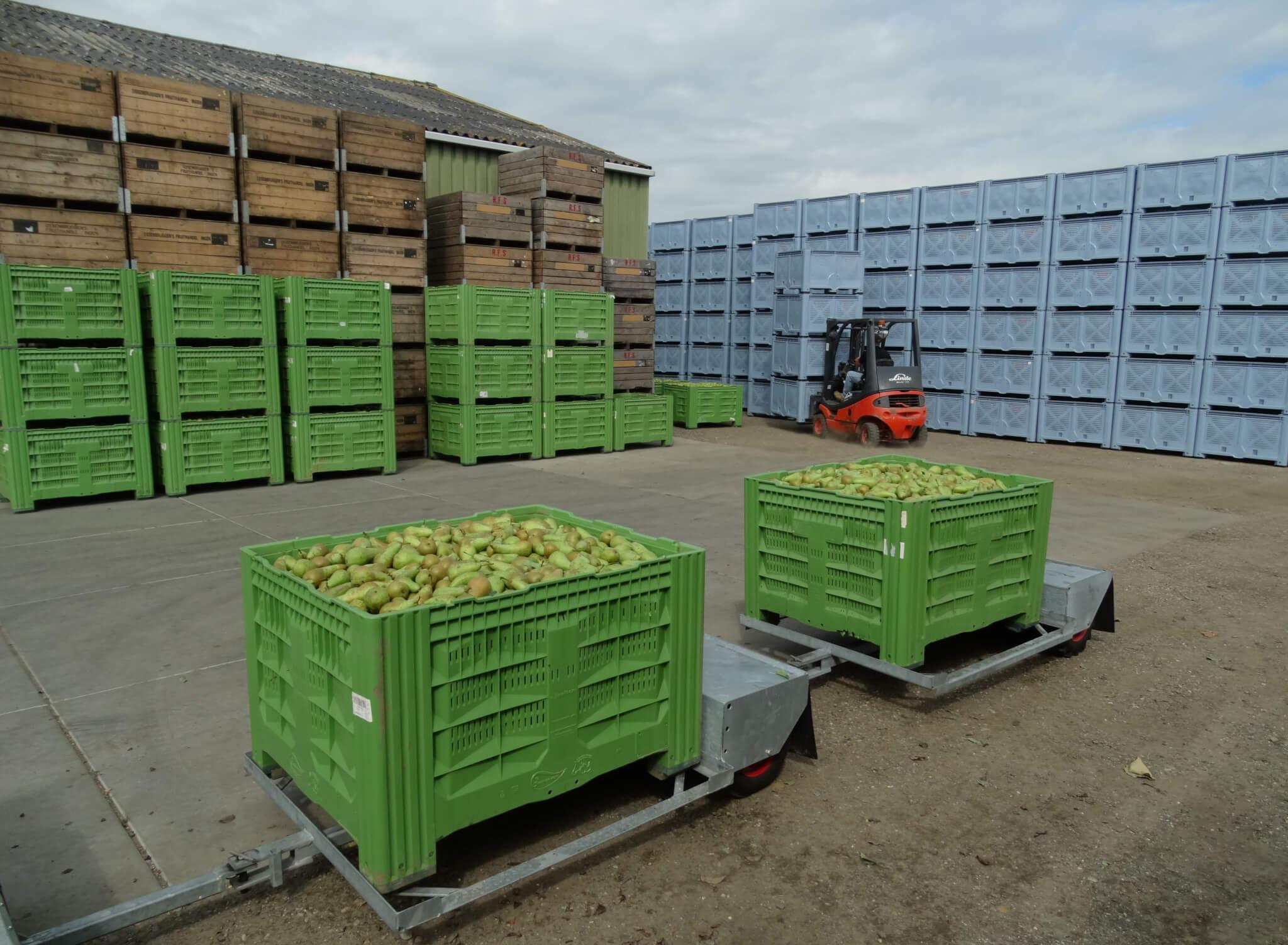 Fruitbedrijf Van den Berge_Pluk 2017_8