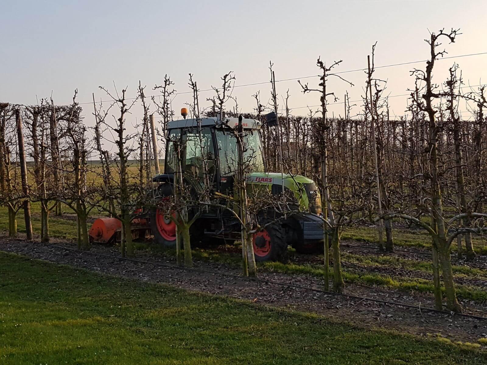 Fruitbedrijf-Van-den-Berge_snoeihout snipperen_11