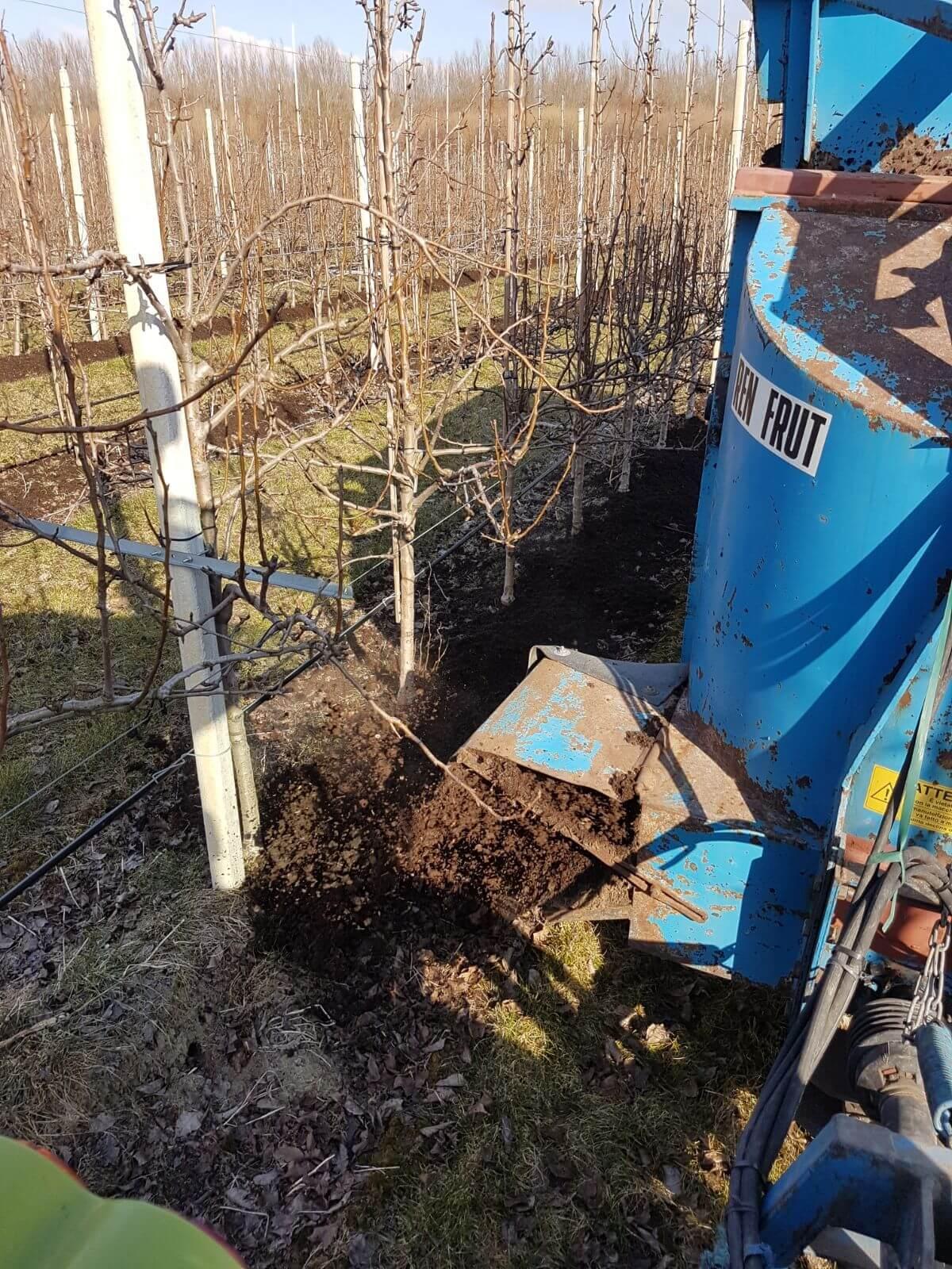 Fruitbedrijf Van den Berge_mest rijden onder de bomen