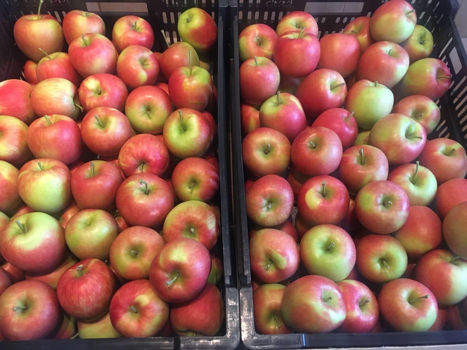 Fruitbedrijf Van den Berge Delcorf nieuwe oogst 2018_5