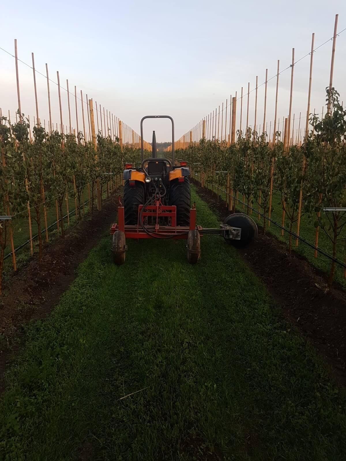 Fruitbedrijf Van den Berge aanaarden jonge bomen01
