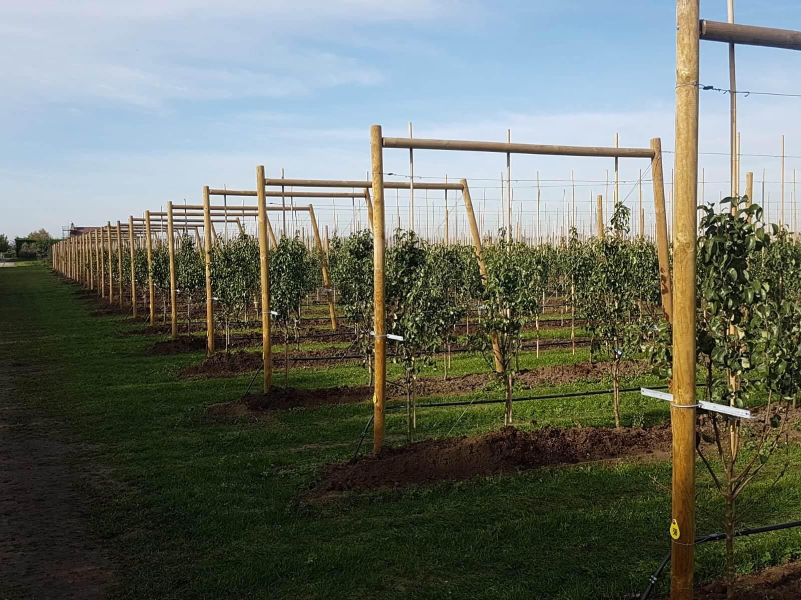 Fruitbedrijf Van den Berge resultaat jonge bomen01