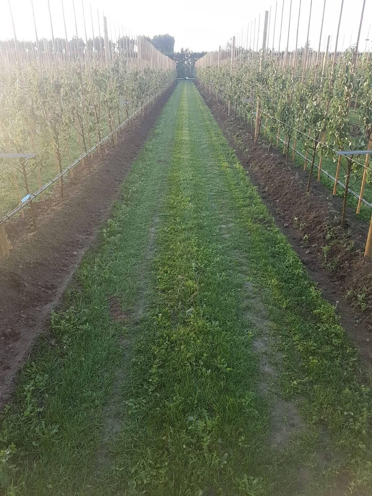 Fruitbedrijf Van den Berge resultaat jonge bomen02
