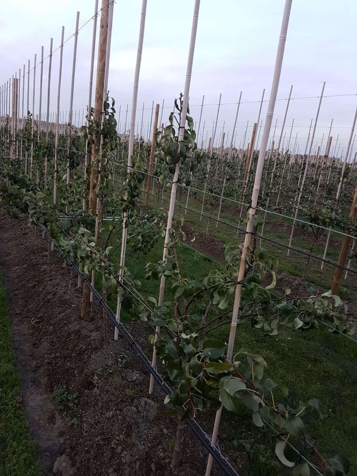 Fruitbedrijf Van den Berge uitbuigen02