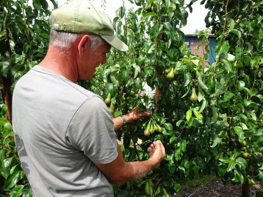Fruitbedrijf Van den Berge: Cor van den Berge