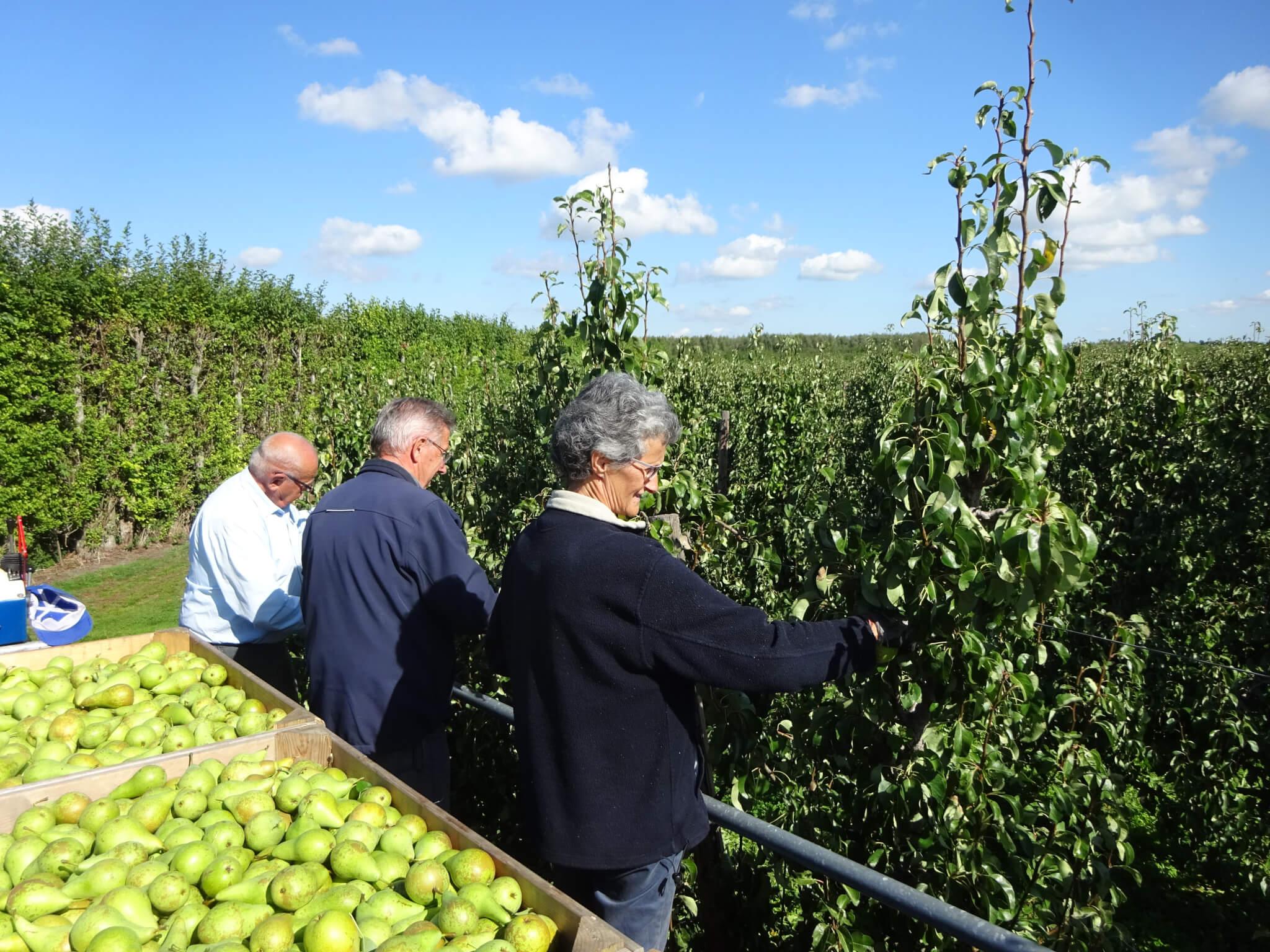 Fruitbedrijf Van den Berge: Hoogwerker pluk