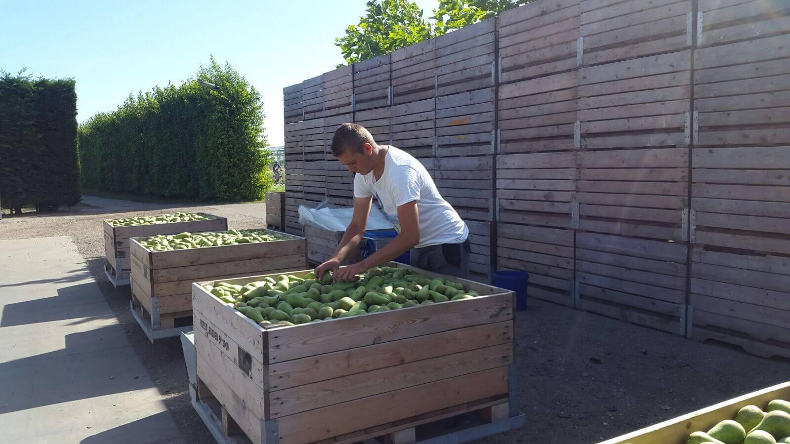 Fruitbedrijf Van den Berge_02