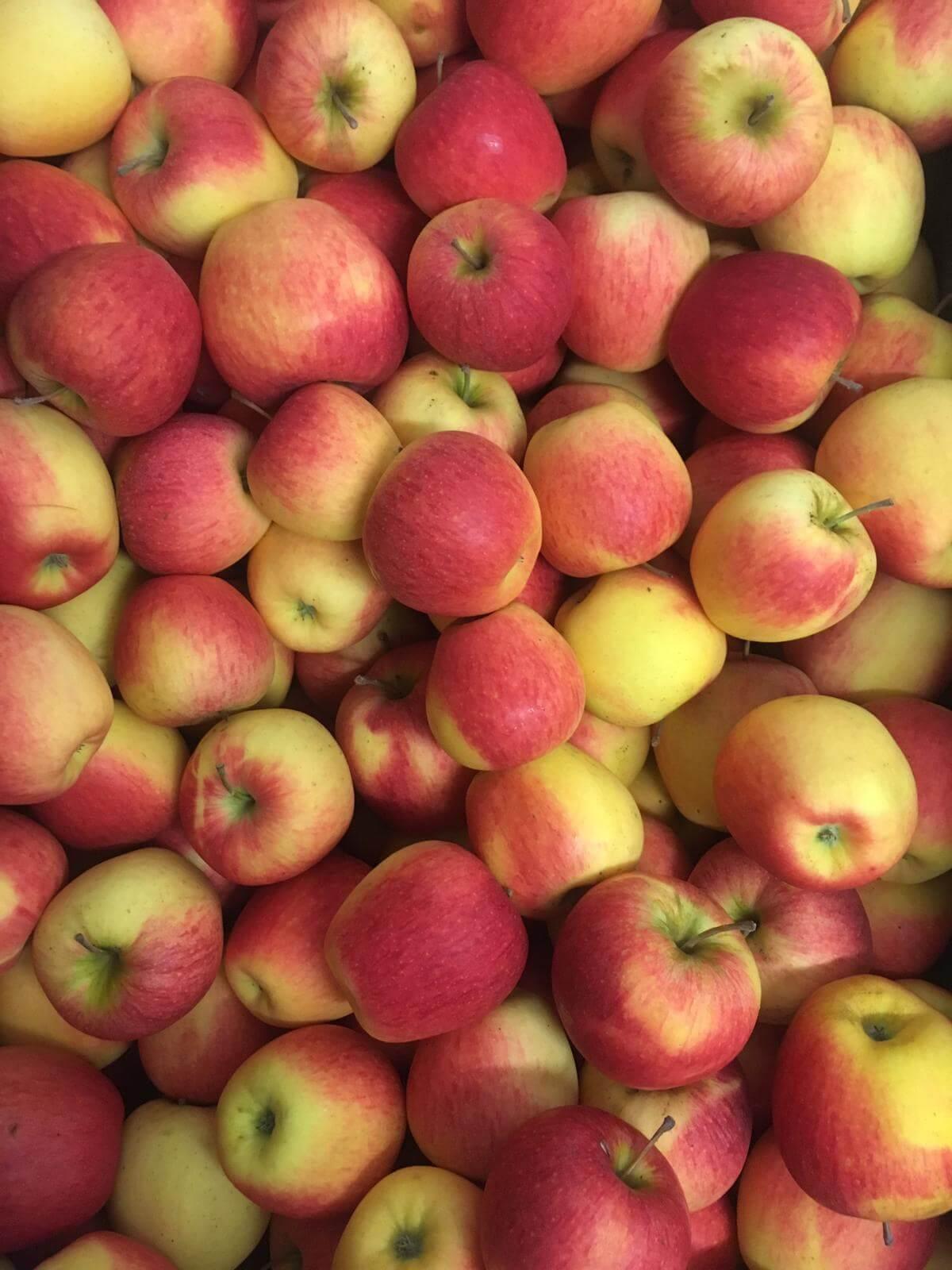 Fruitbedrijf Van den Berge: appel Evelina