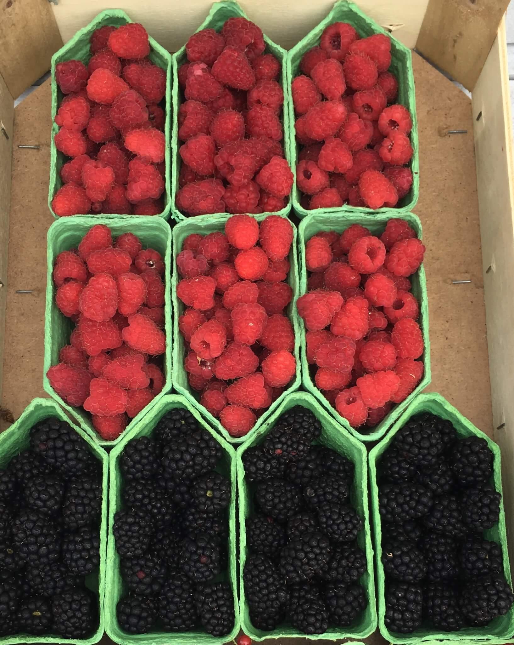 Fruitbedrijf Van den Berge frambozen bramen