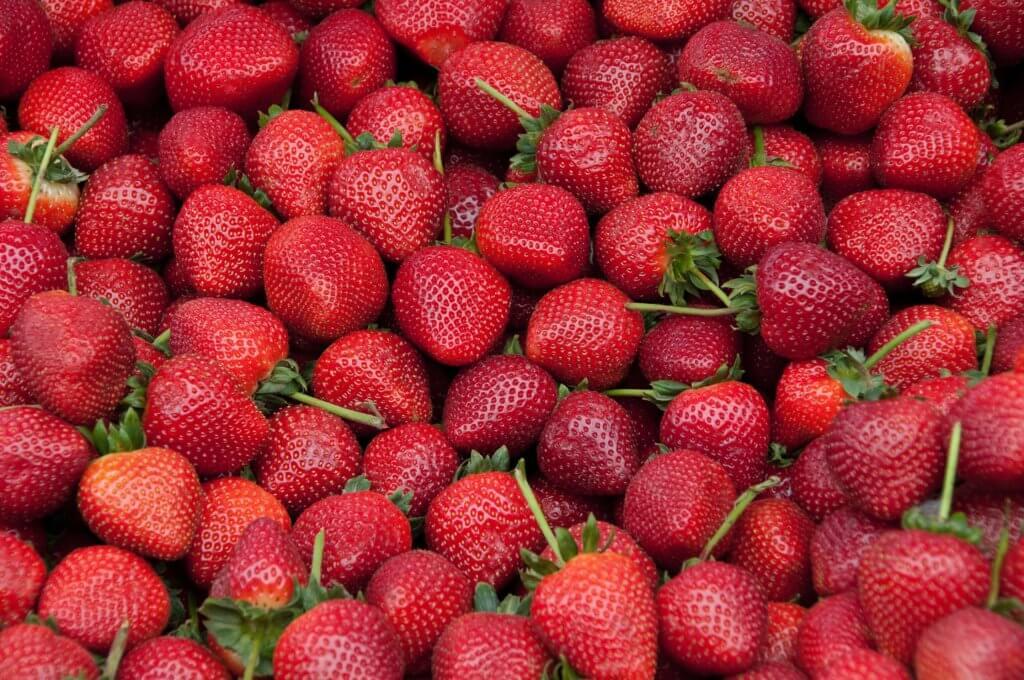 Fruitbedrijf Van den Berge: aardbeien 1