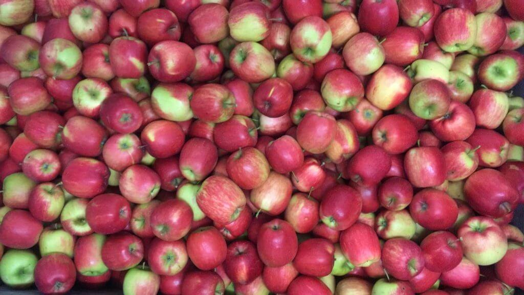 Fruitbedrijf Van den Berge Delcorf 2