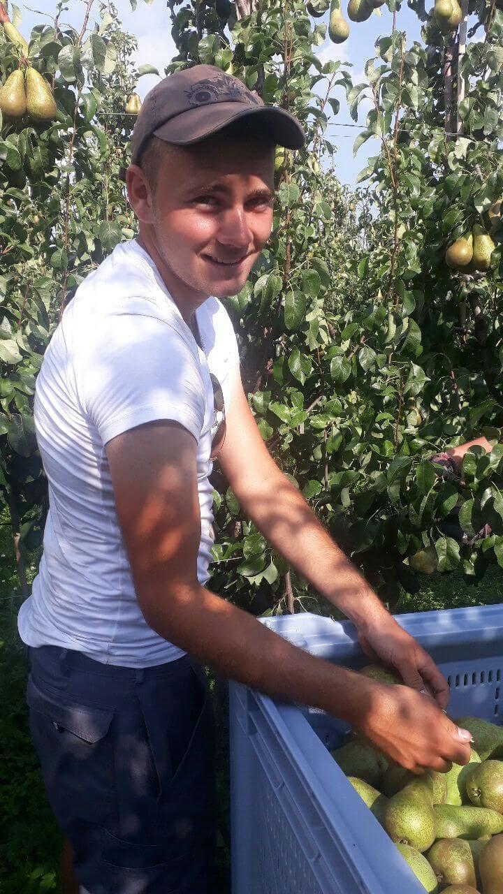 Fruitbedrijf Van den Berge Pluk 2019 2