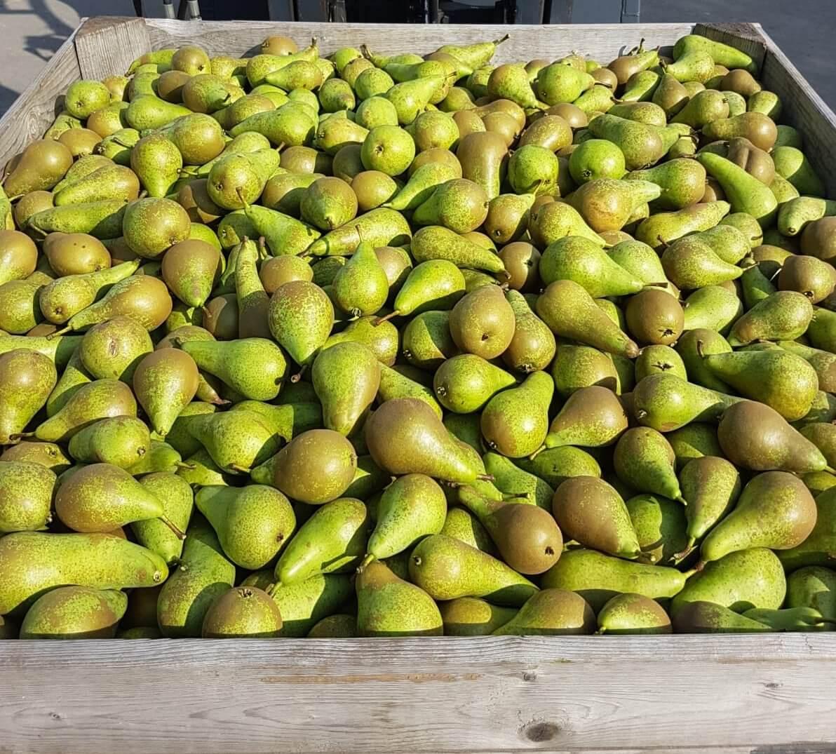 Fruitbedrijf Van den Berge: pluk2019 01