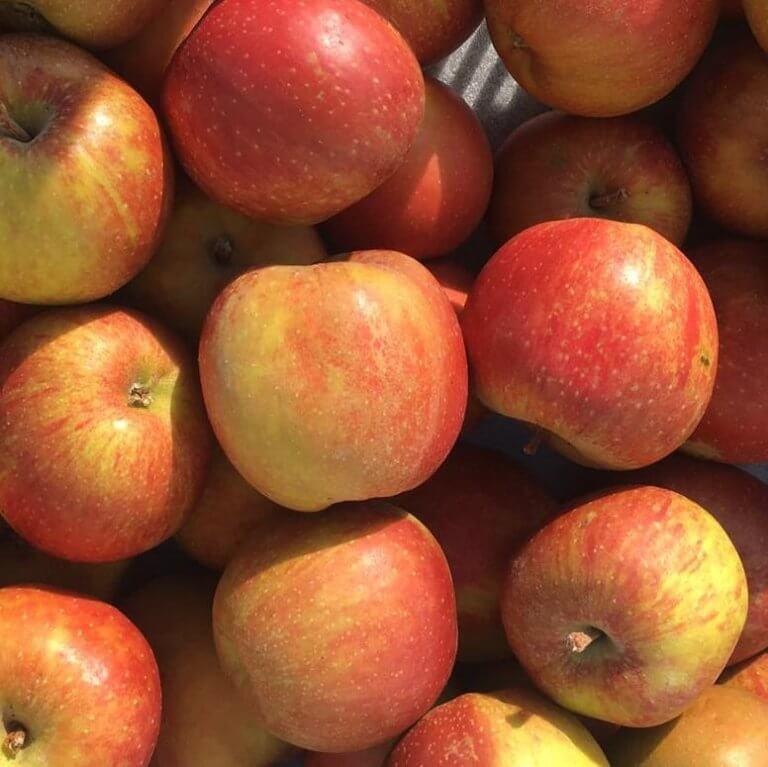 Fruitbedrijf Van den Berge: appels goudreinet