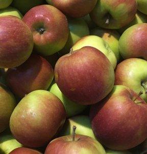 Fruitbedrijf Van den Berge: appels jonagold