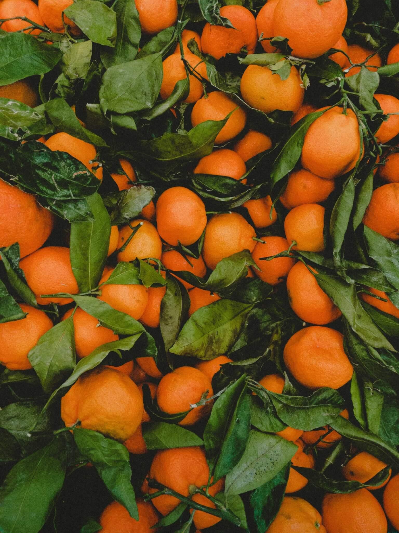 Fruitbedrijf Van den Berge: mandarijnen 7