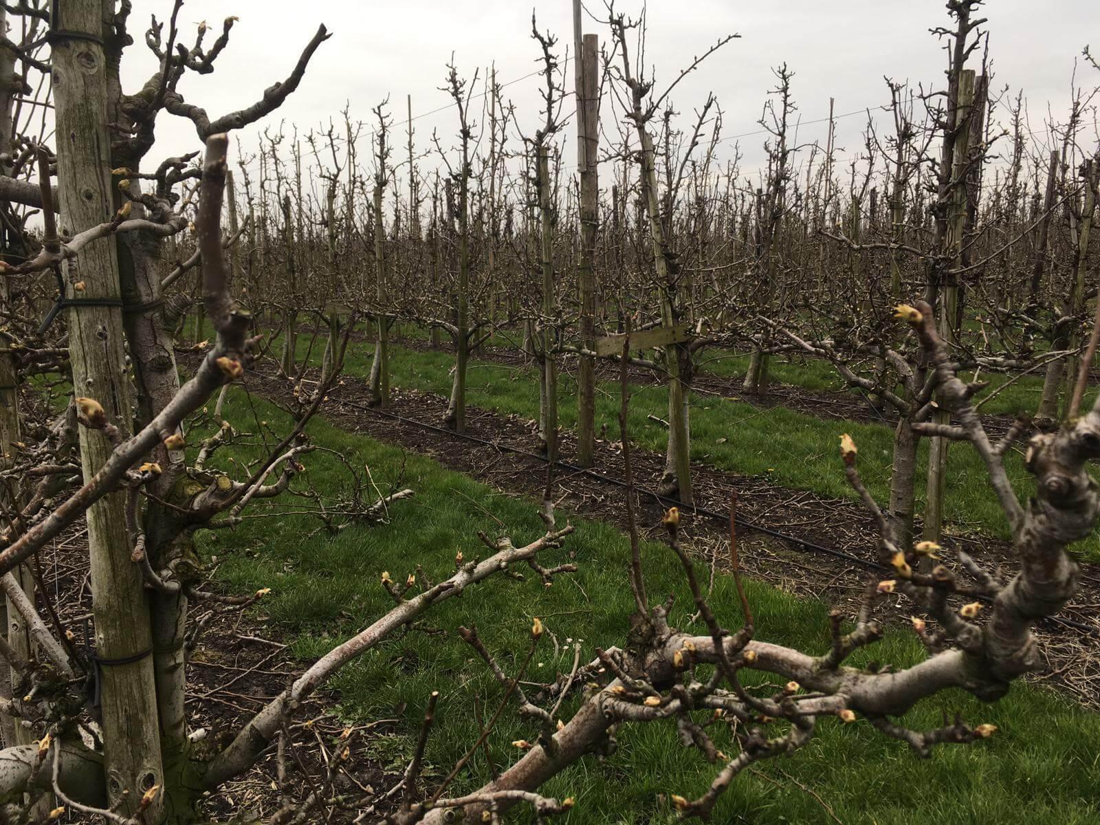 Fruitbedrijf Van den Berge bloei: 2020 1