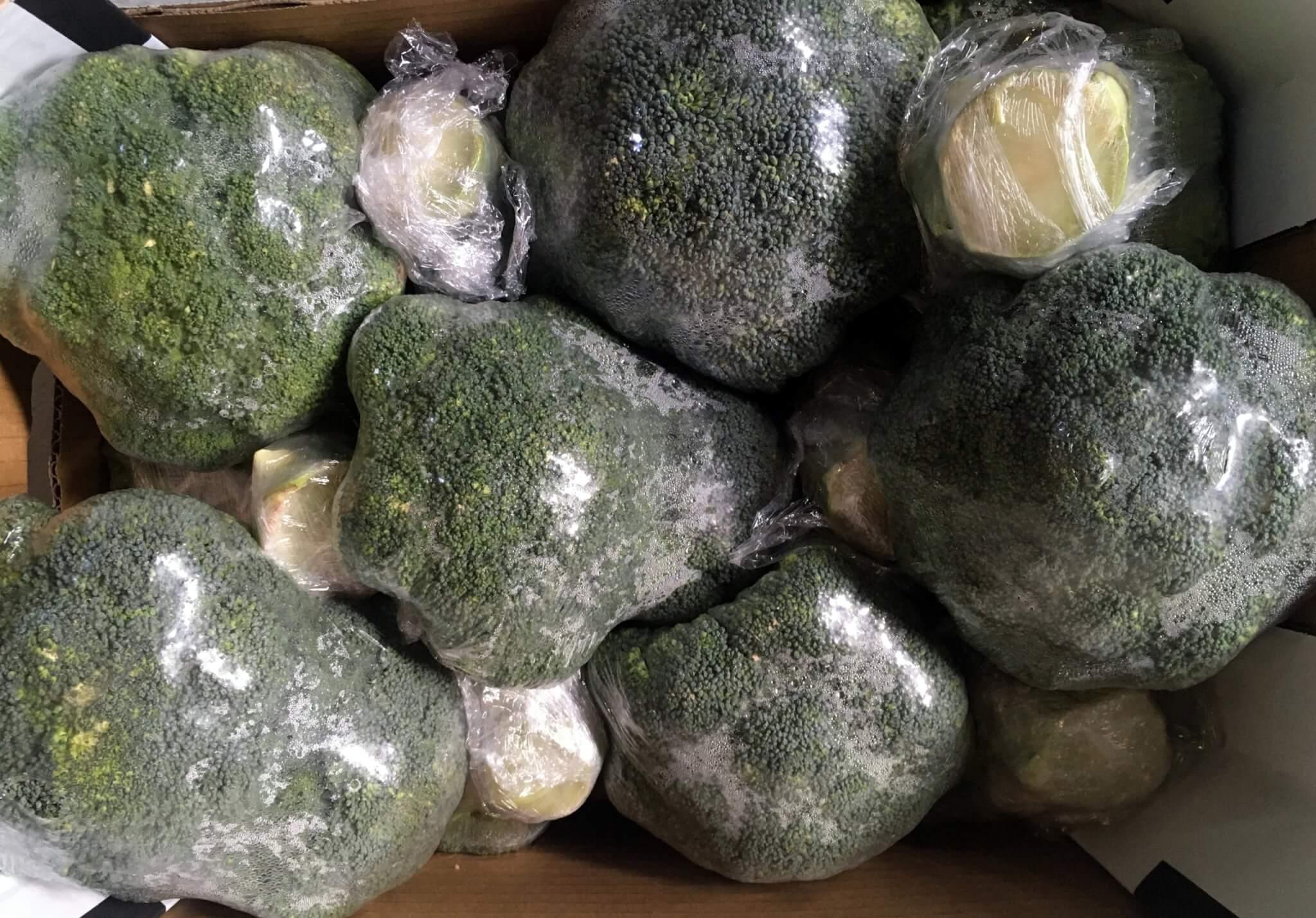 Fruitbedrijf Van den Berge: broccoli