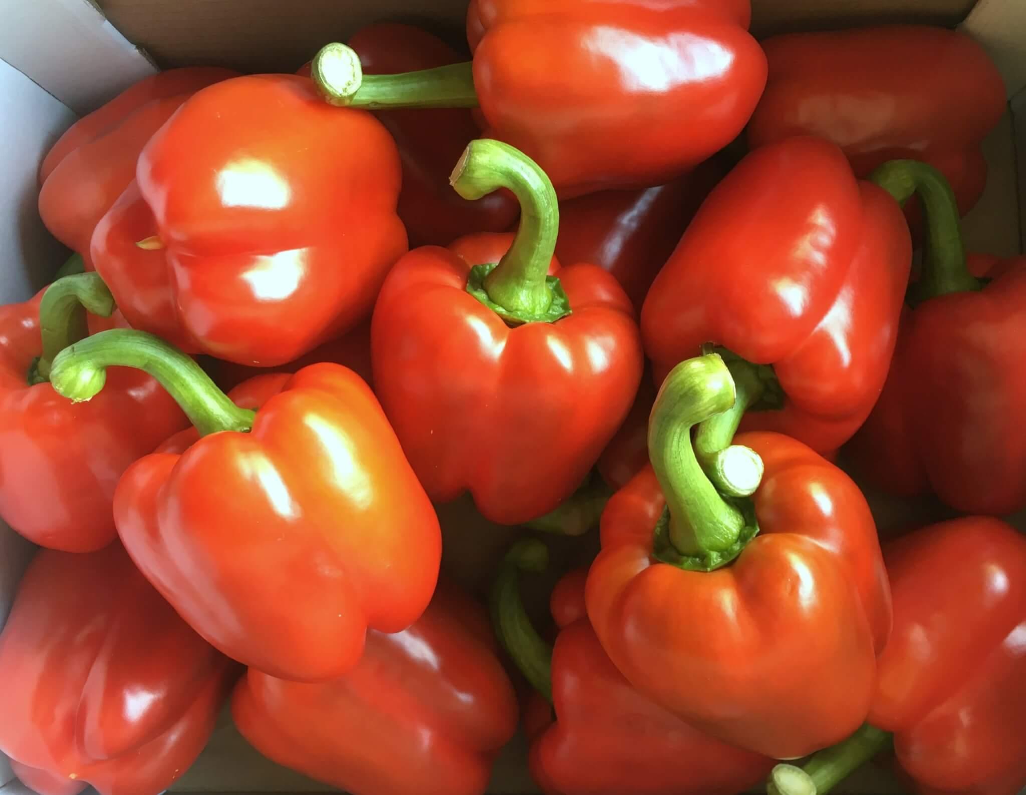 Fruitbedrijf Van den Berge: paprika