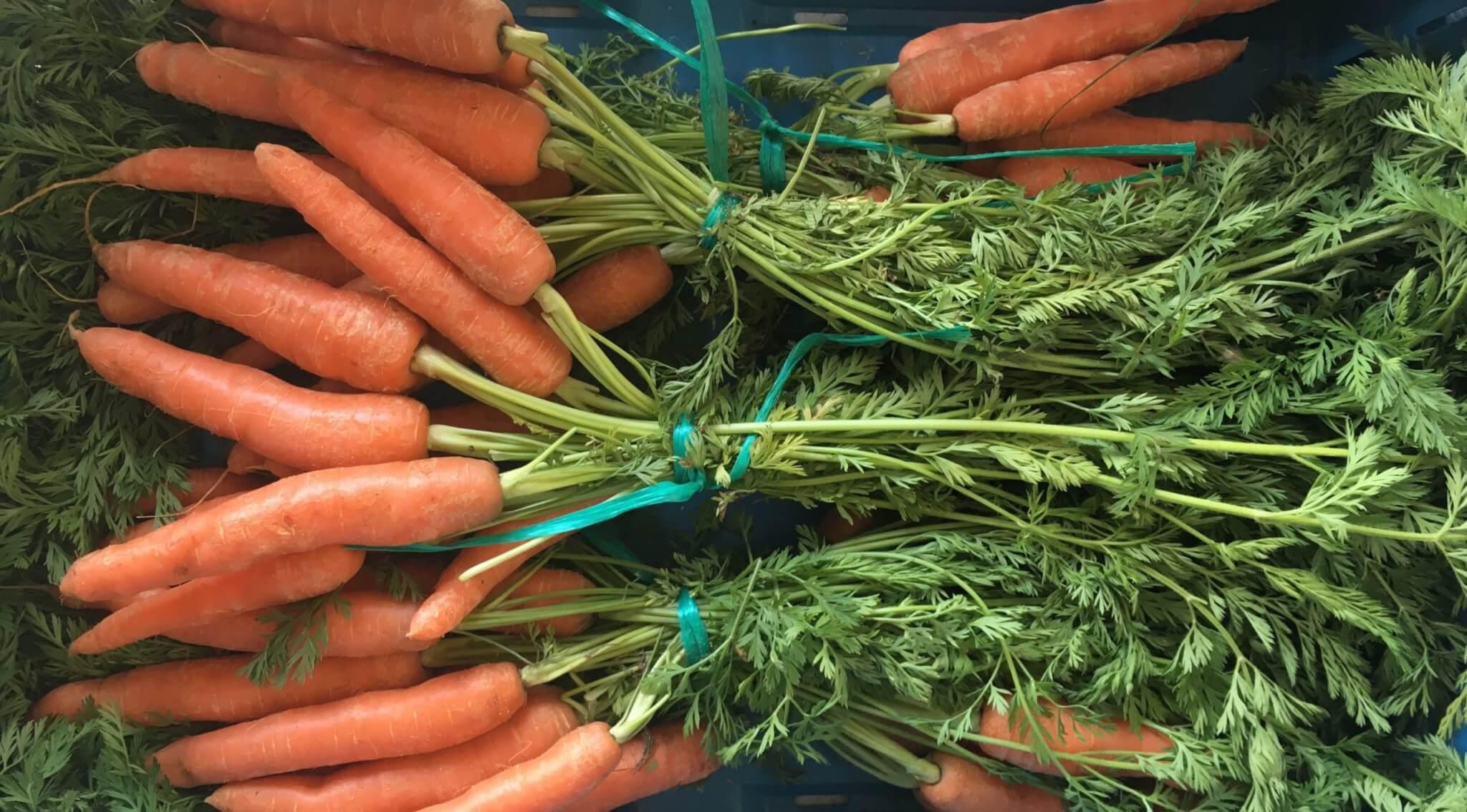 Fruitbedrijf Van den Berge: worteltjes