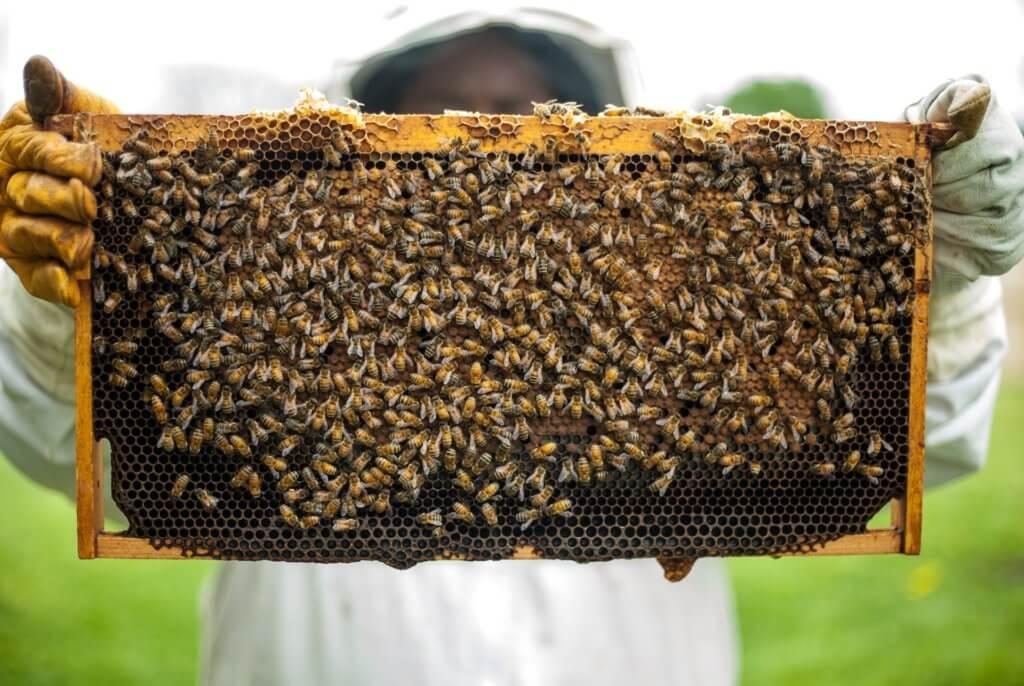 Fruitbedrijf Van den Berge honing 6