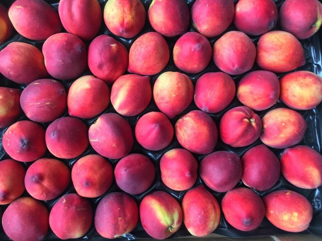 Fruitbedrijf Van den Berge nectarine