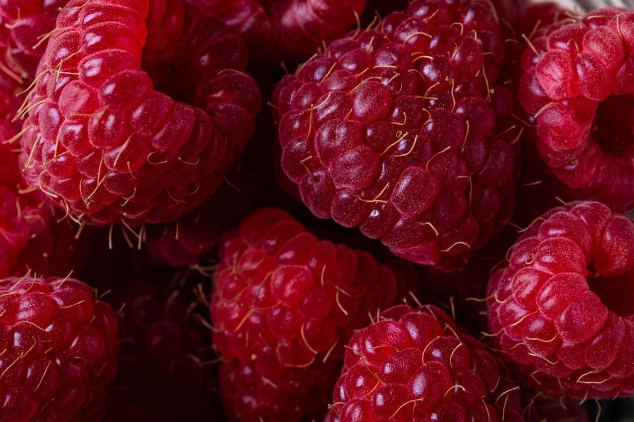 Fruitbedrijf Van den Berge: frambozen