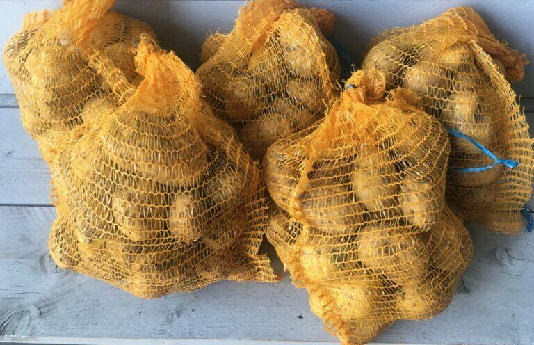 Fruitbedrijf Van den Berge: Agria frietaardappel