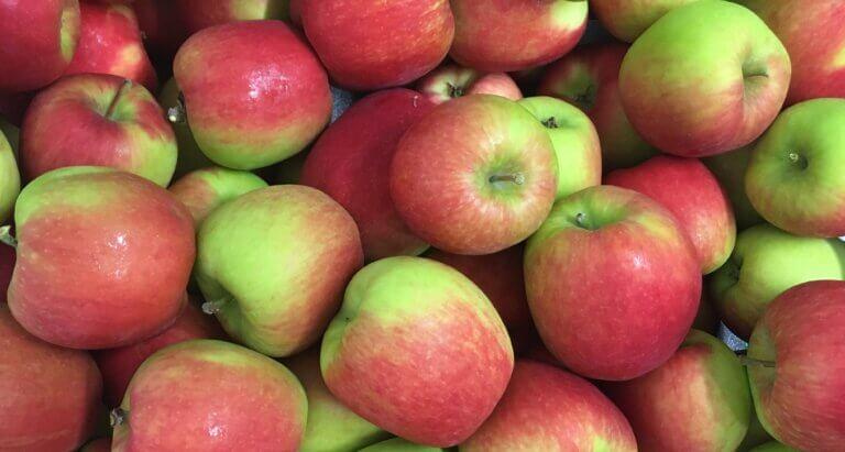 Fruitbedrijf Van den Berge: Delcorf 2020