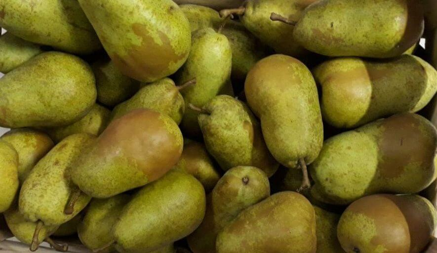 Fruitbedrijf Van den Berge: Triomph de Vienne-1