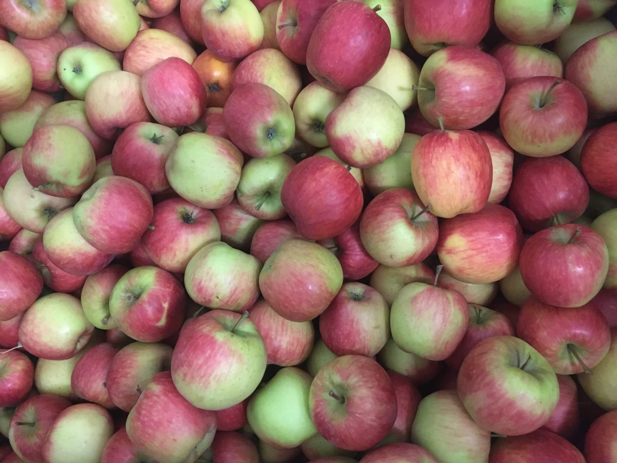 Fruitbedrijf Van den Berge: Zari