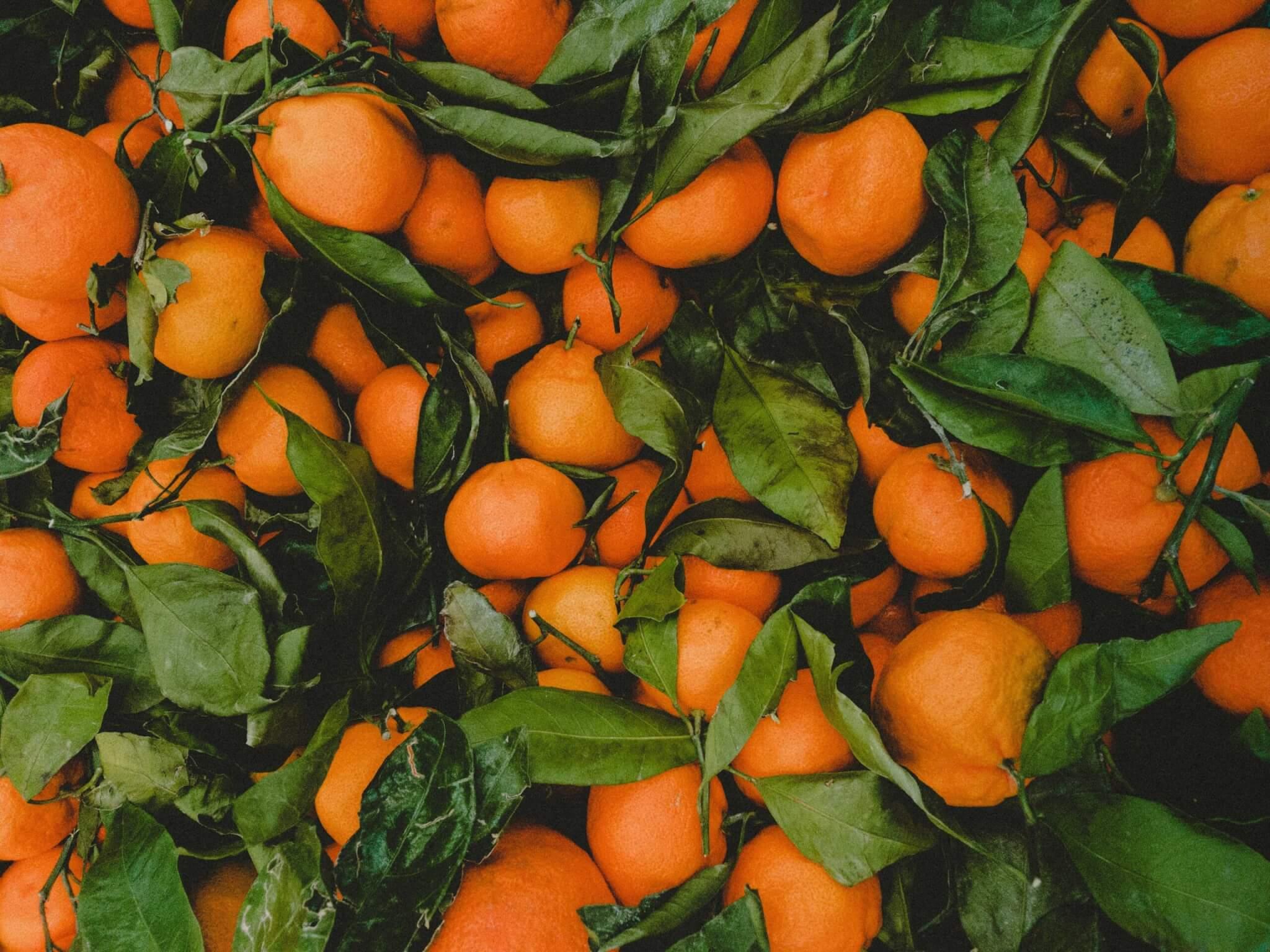 Fruitbedrijf Van den Berge- mandarijnen 7