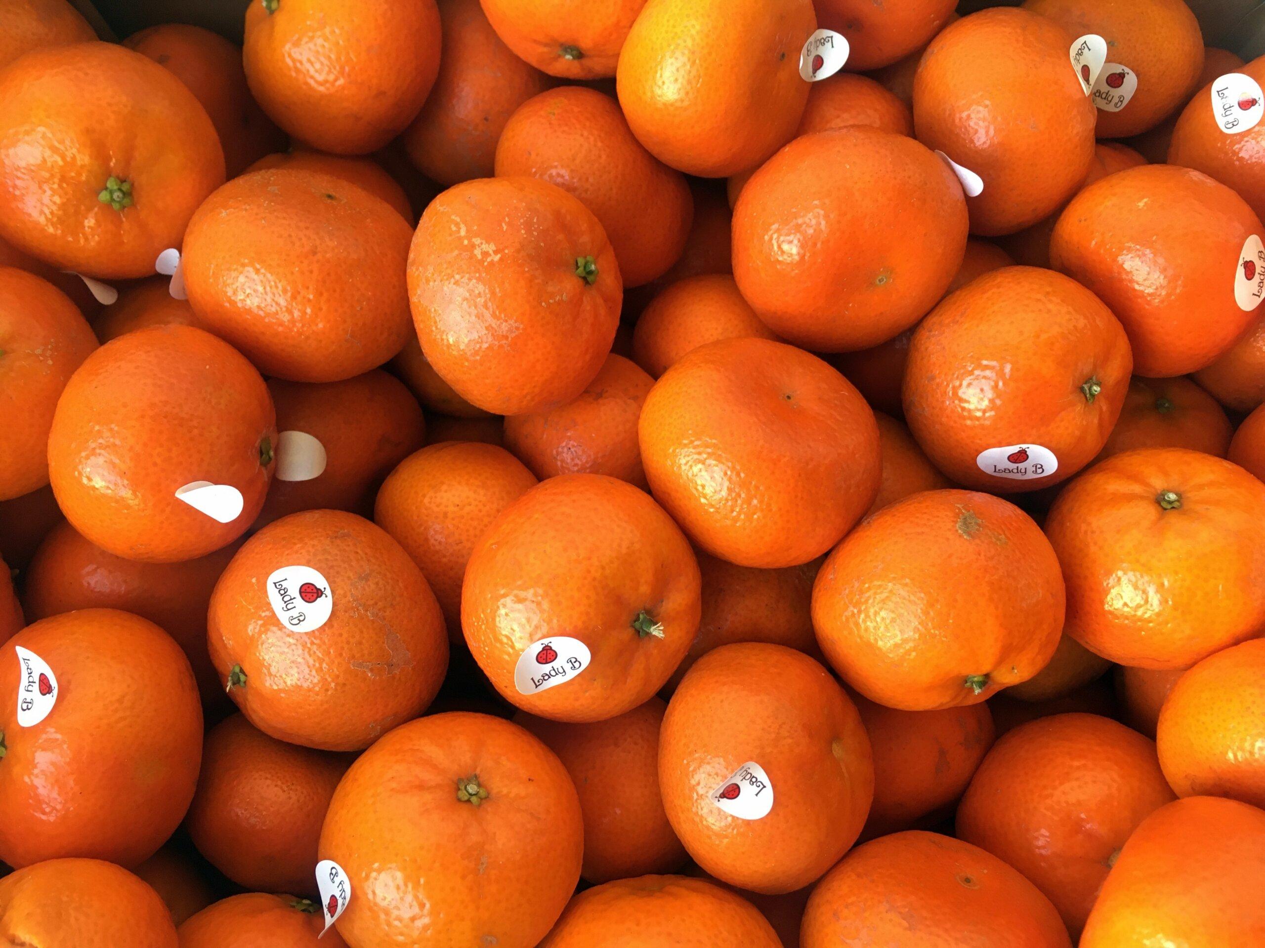 Fruitbedrijf Van den Berge: mandarijnen