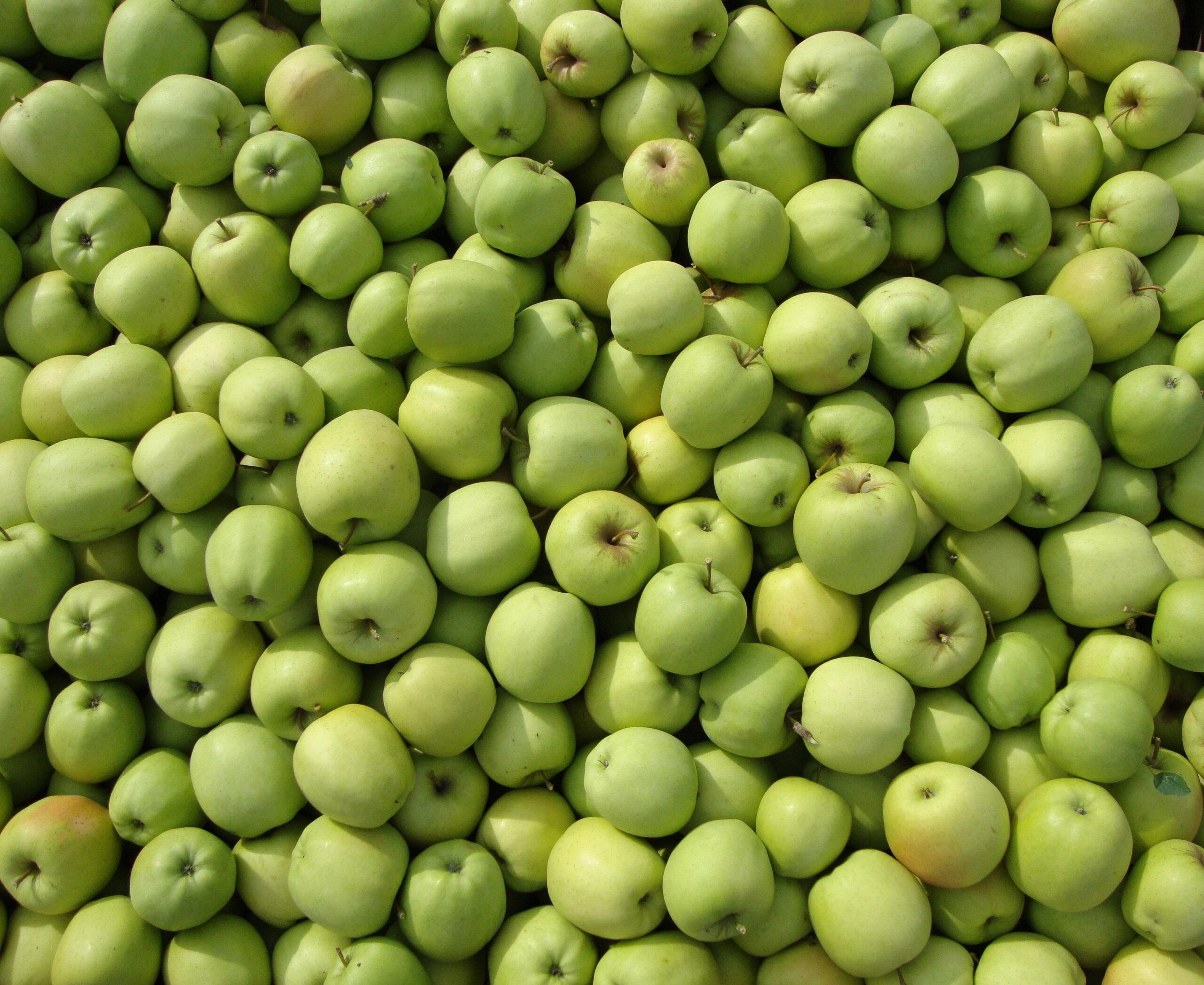 Fruitbedrijf Van den Berge Golden Delicious