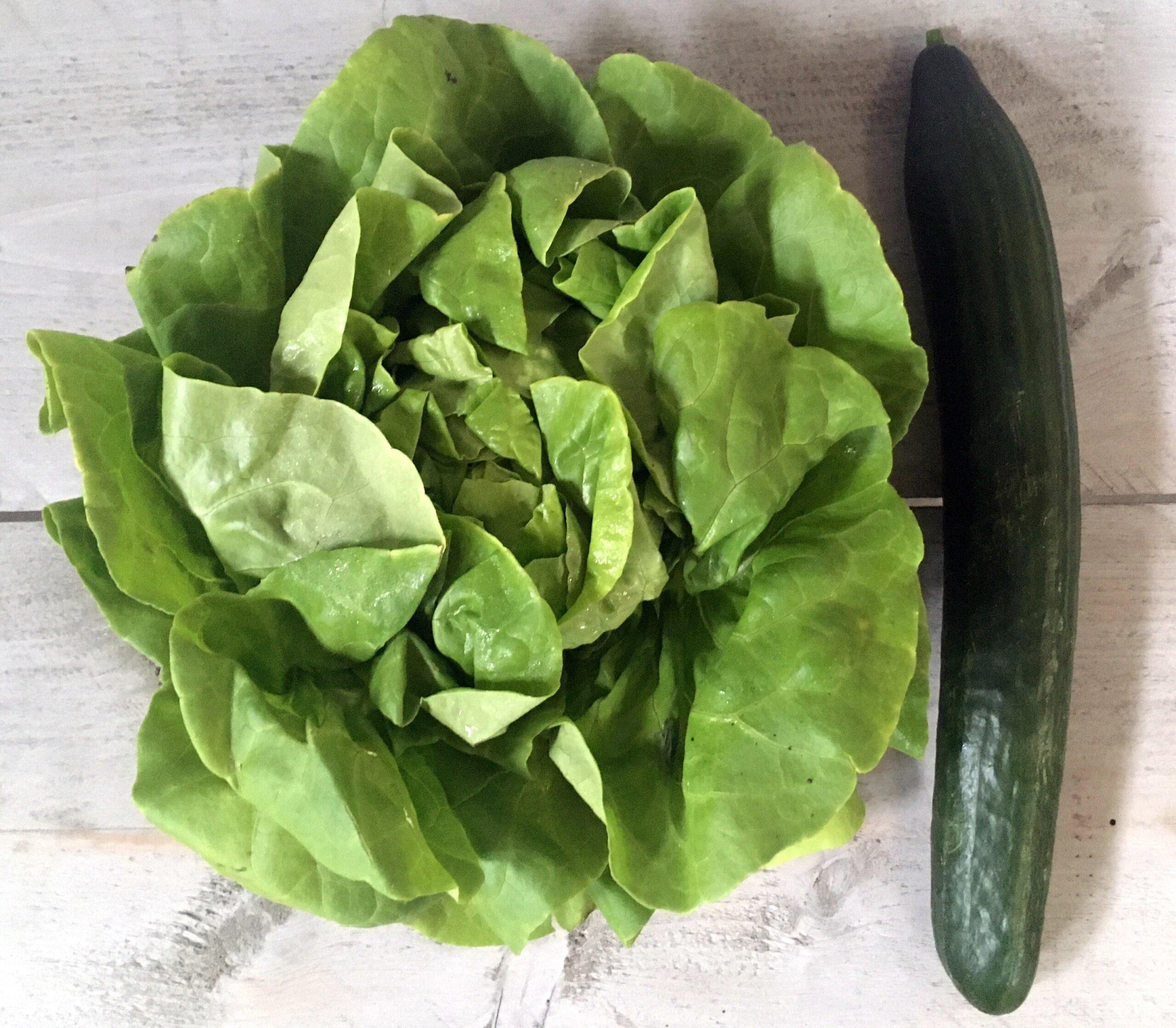 Fruitbedrijf Van den Berge krop sla-komkommer