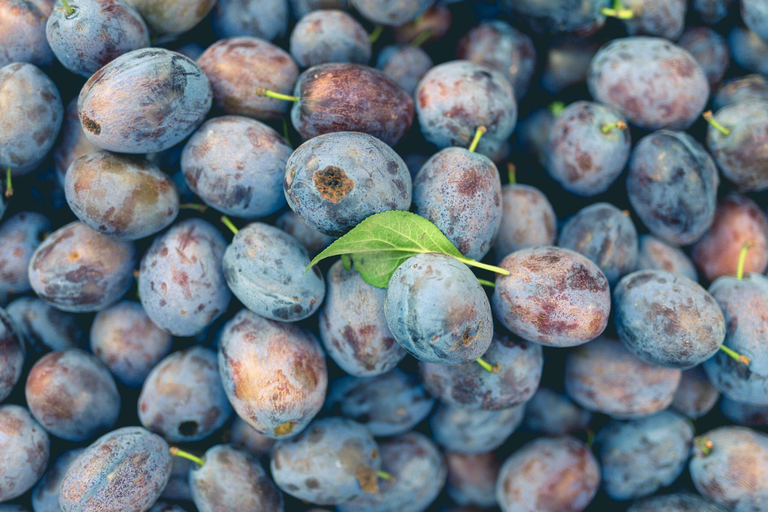 Fruitbedrijf Van den Berge pruimen (horizontaal)